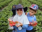 Strawberry Picking for Hifz A and Foundation