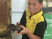 Year 3 Incursion: Reptile Encounters