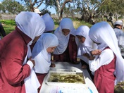 Hifz Students learn about our local Creek