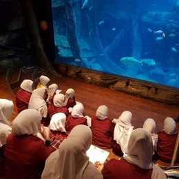 Year 7 Excursion to the Melbourne Aquarium